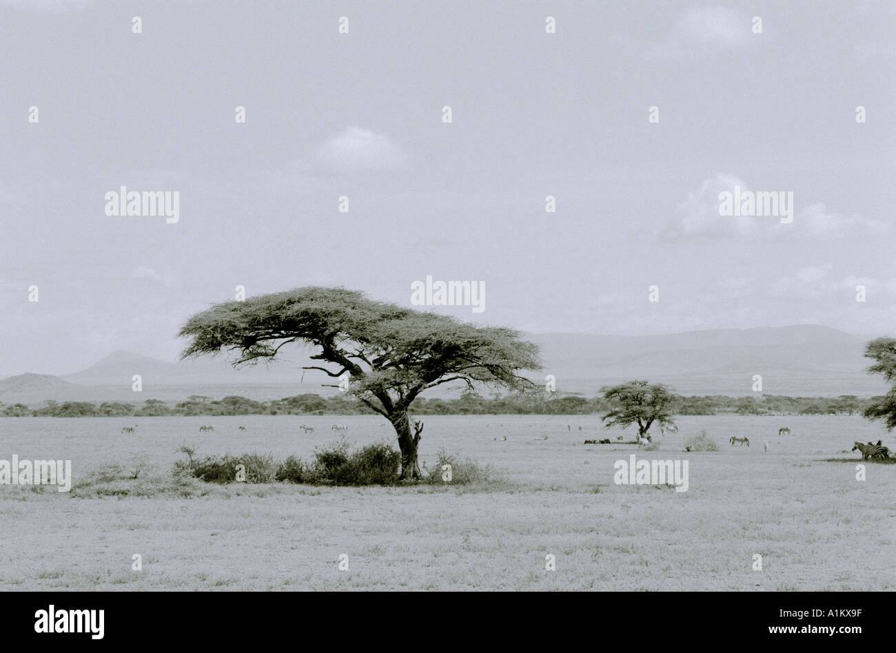 World Landscapes. Adventure safari travel in the beautiful Serengeti National Park landscape in Tanzania in Africa. Stock Photo
