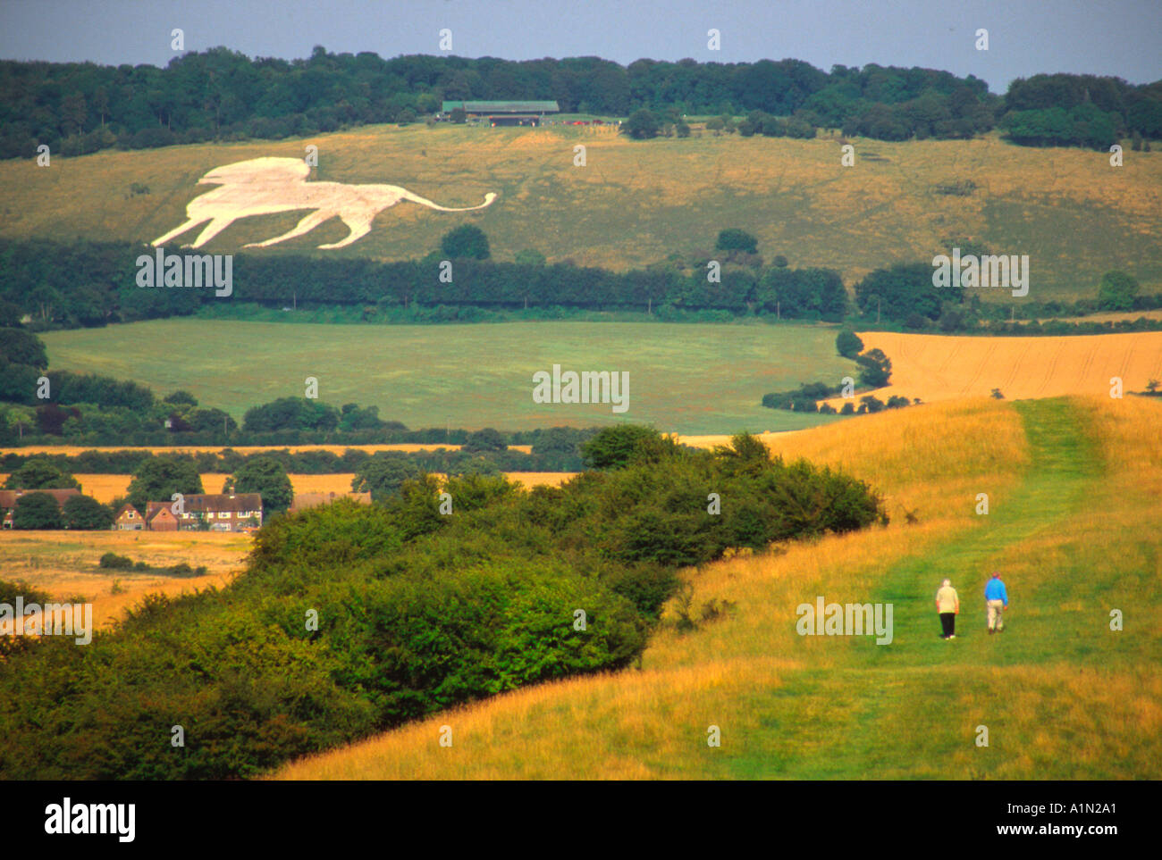 Chilterns English Countryside Bedfordshire Whipsnade Zoo Lion in background - Stock Image