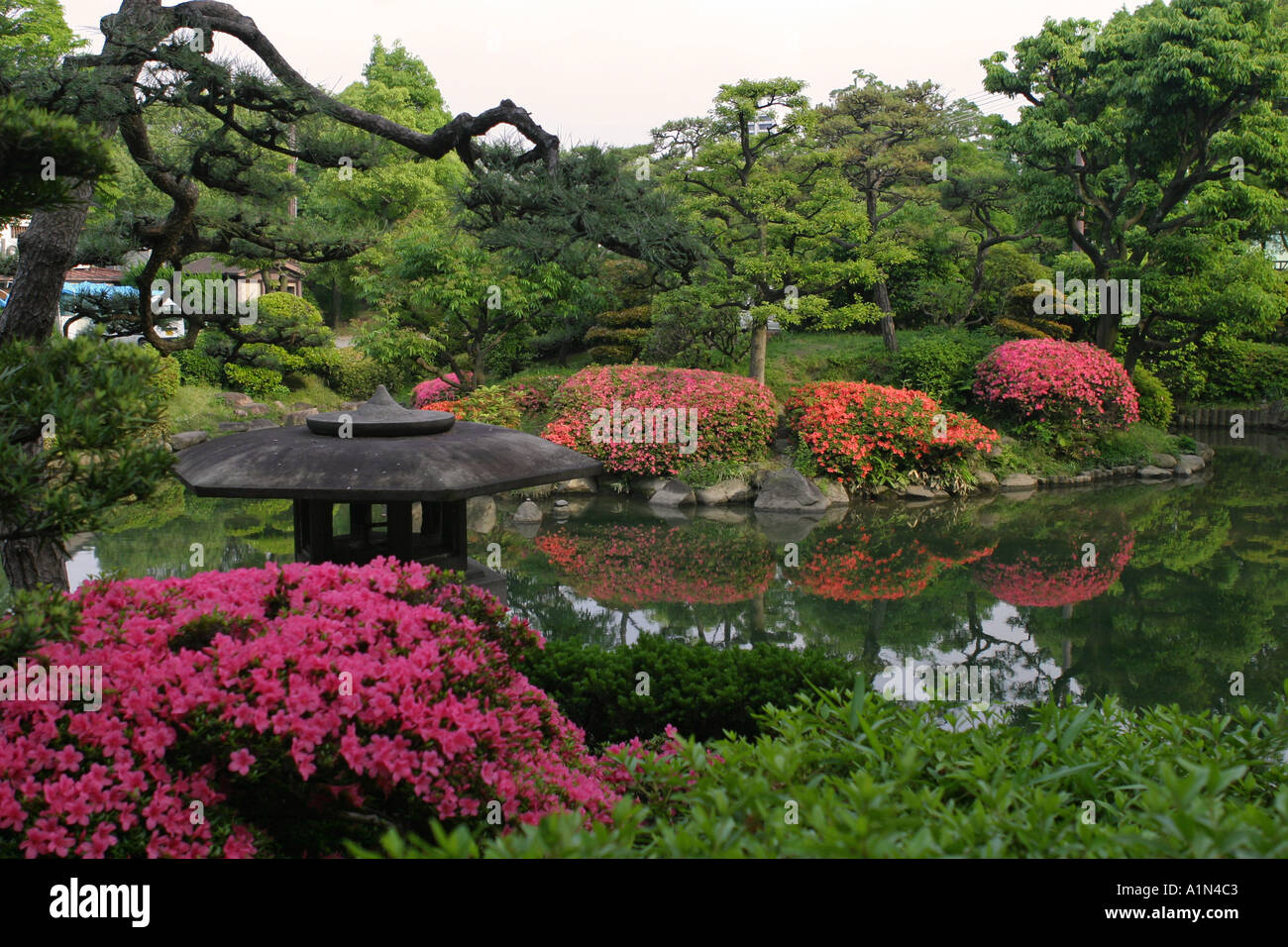 Japan Garden Flowers: Typical Lush Green Japanese Garden With Bright Pink