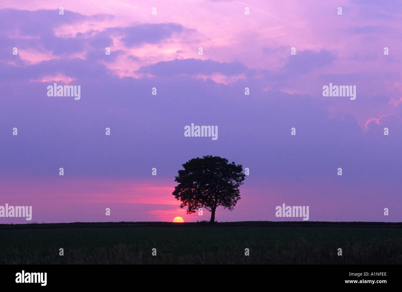 Single Tree At Sunset Taken In France - Stock Image