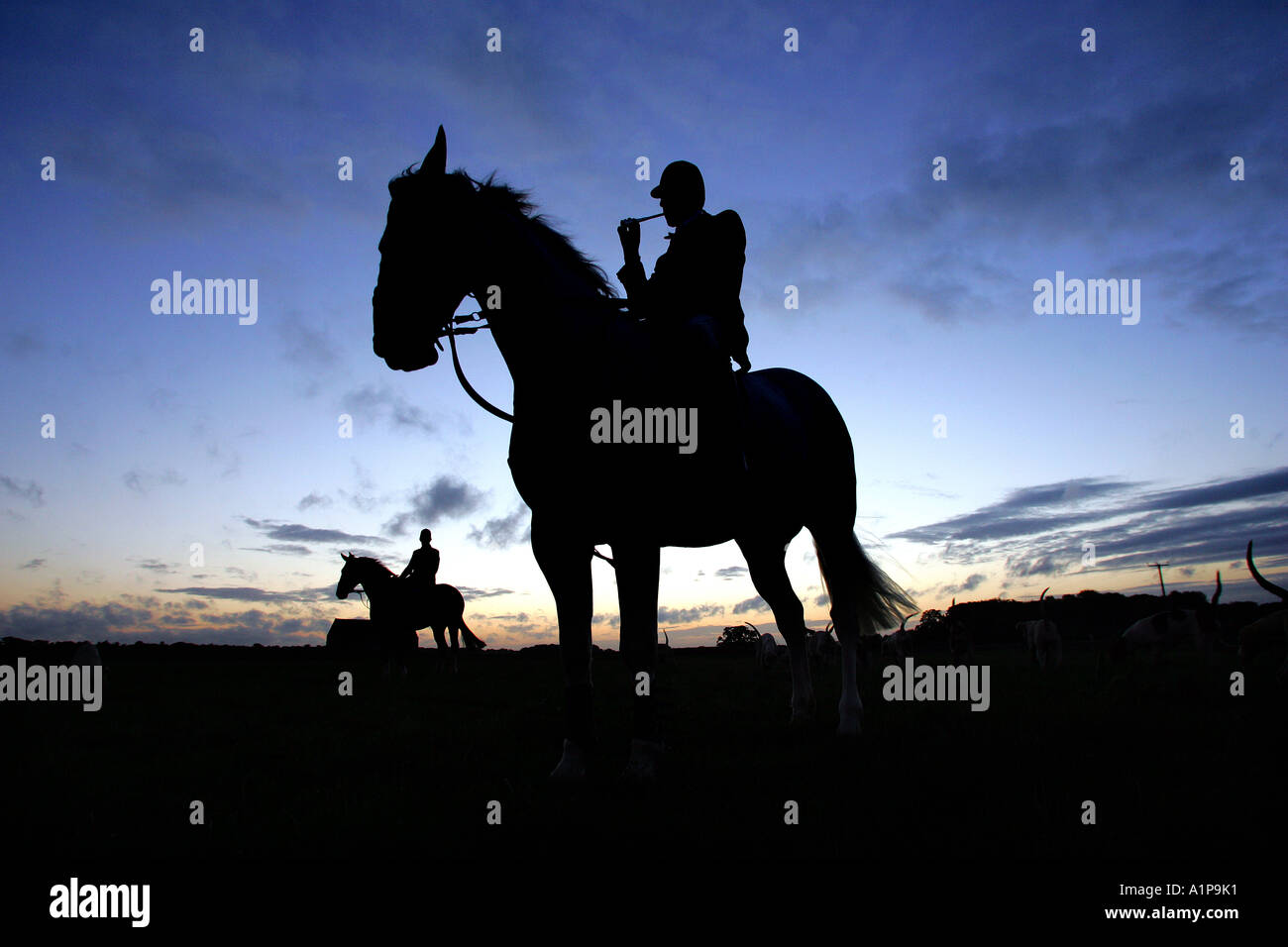 Silhouette of huntsmen sounding the horn to signal the start of a dawn hunt in Gloucester UK - Stock Image