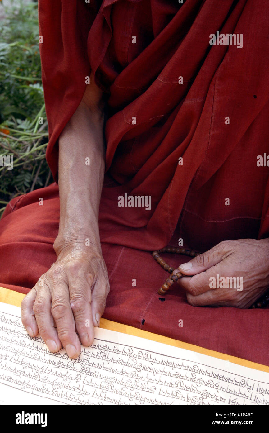 A Tibetan Buddhist monk reads a traditional sutra (scripture) in Pali at the Mahabodhi temple in Bodhgaya in Bihar in India. - Stock Image