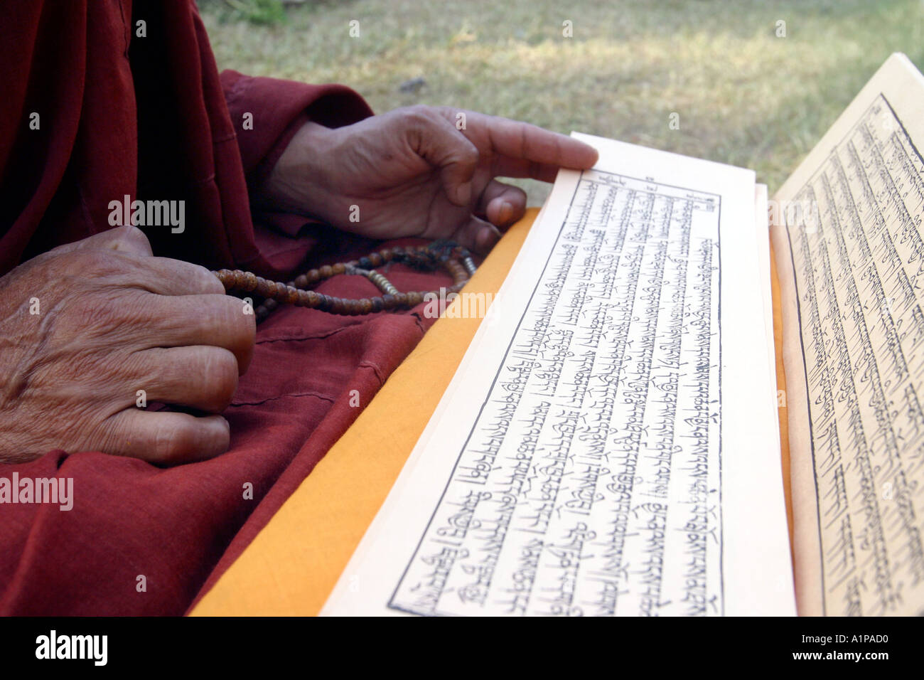 A Tibetan Buddhist Monk reads a traditional Buddhist sutra (scripture) in Bodhgaya in Bihar in India - Stock Image