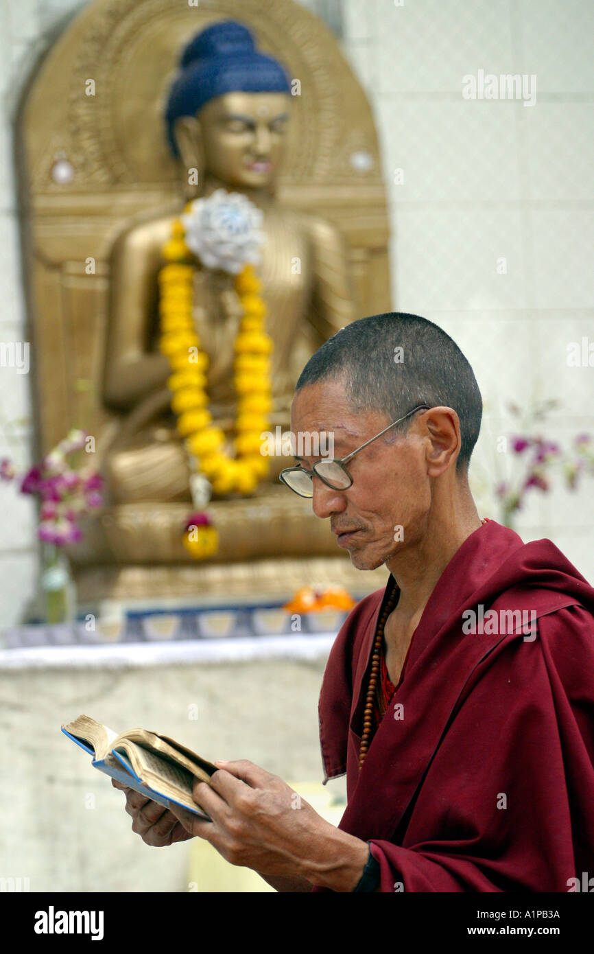 A Buddhist monk reads a scripture in front of a Buddha statue in Bodhgaya in Bihar in India - Stock Image
