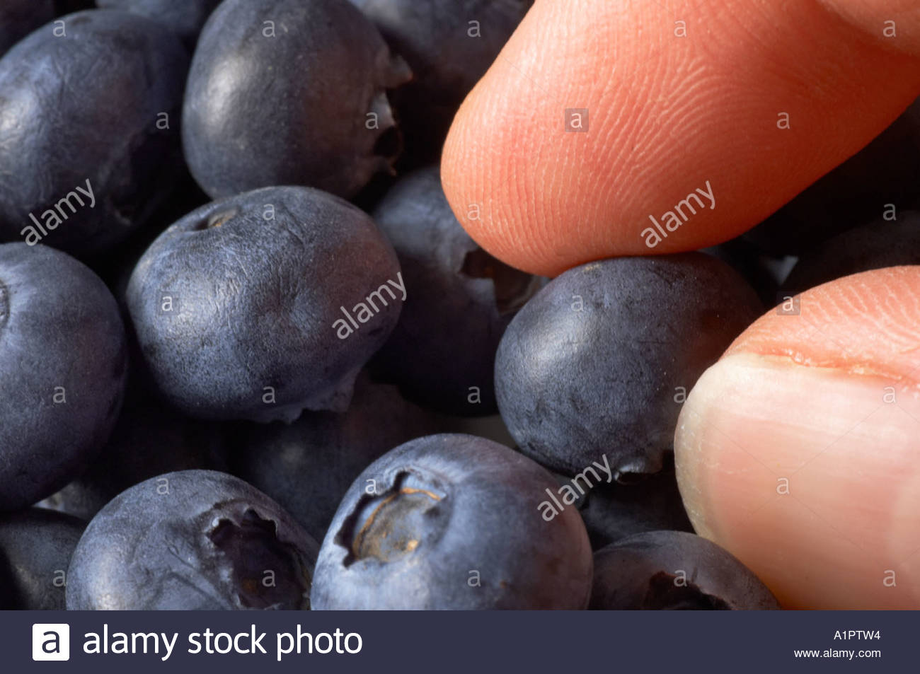 Picking up a blueberry from a dish - Stock Image