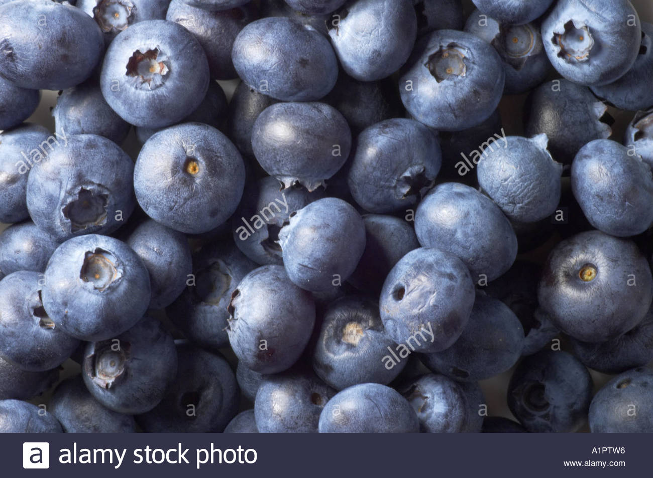 A number of blueberries - Stock Image