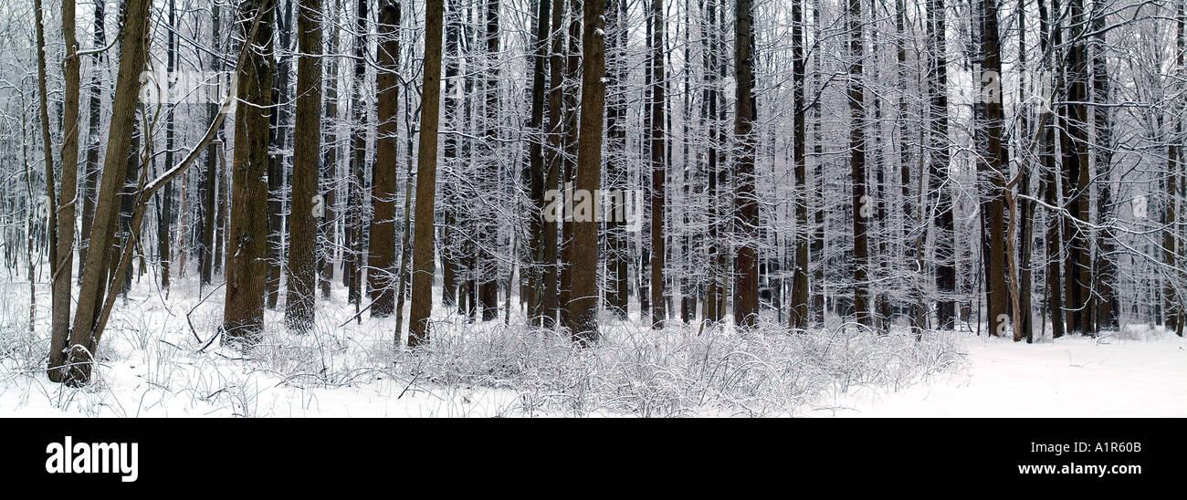 Winter Landscape in Jocky Hollow NHP, Morristown, NJ - Stock Image