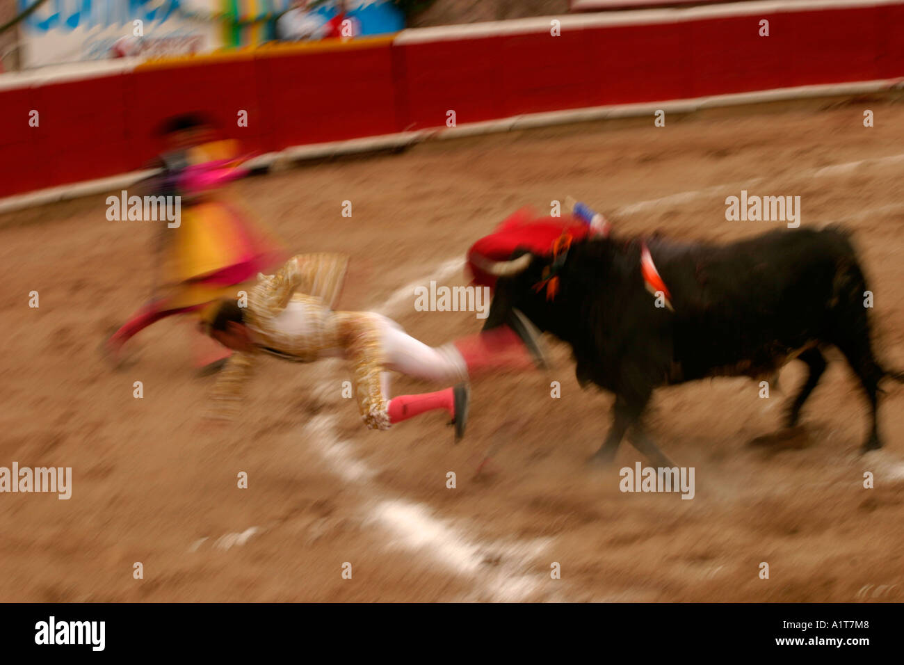 A bullfighter in Mexico is tossed aside during a fight - Stock Image