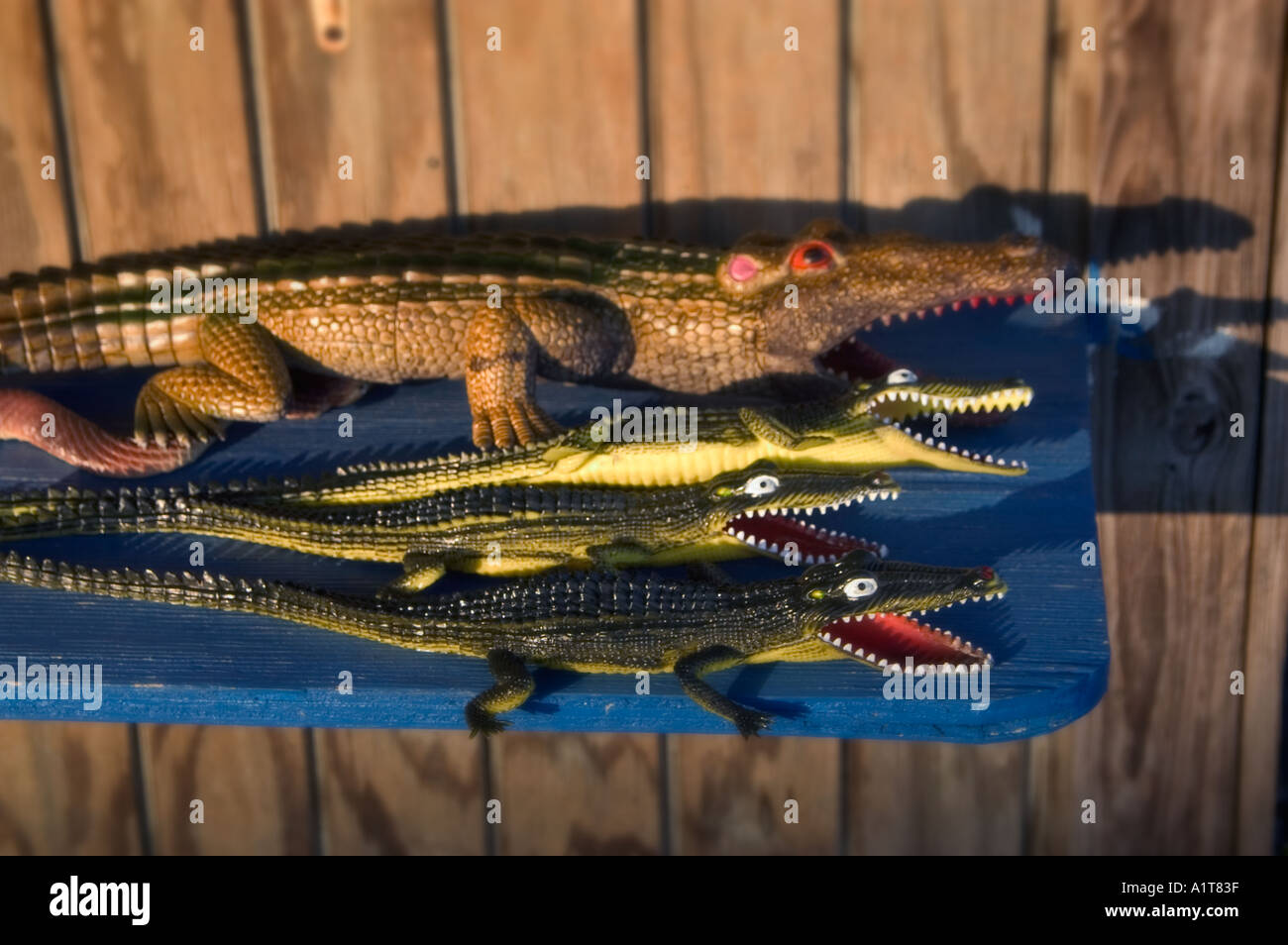 Rubber Alligator Stock Photos & Rubber Alligator Stock Images - Alamy