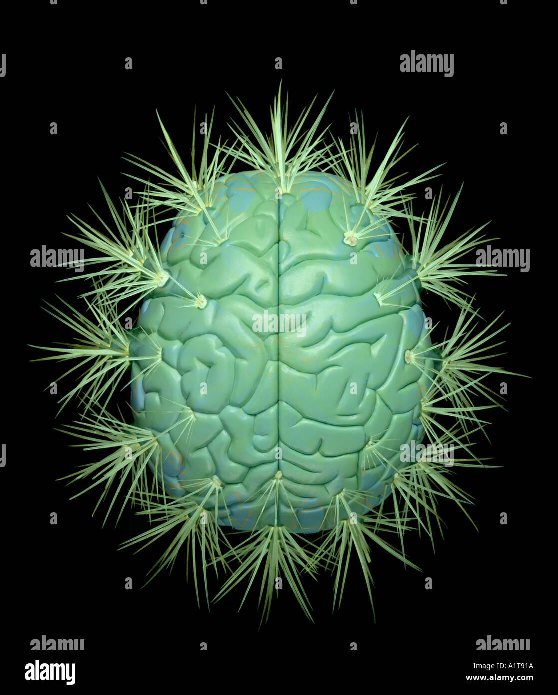 Human Brain with cactus thorns - Stock Image