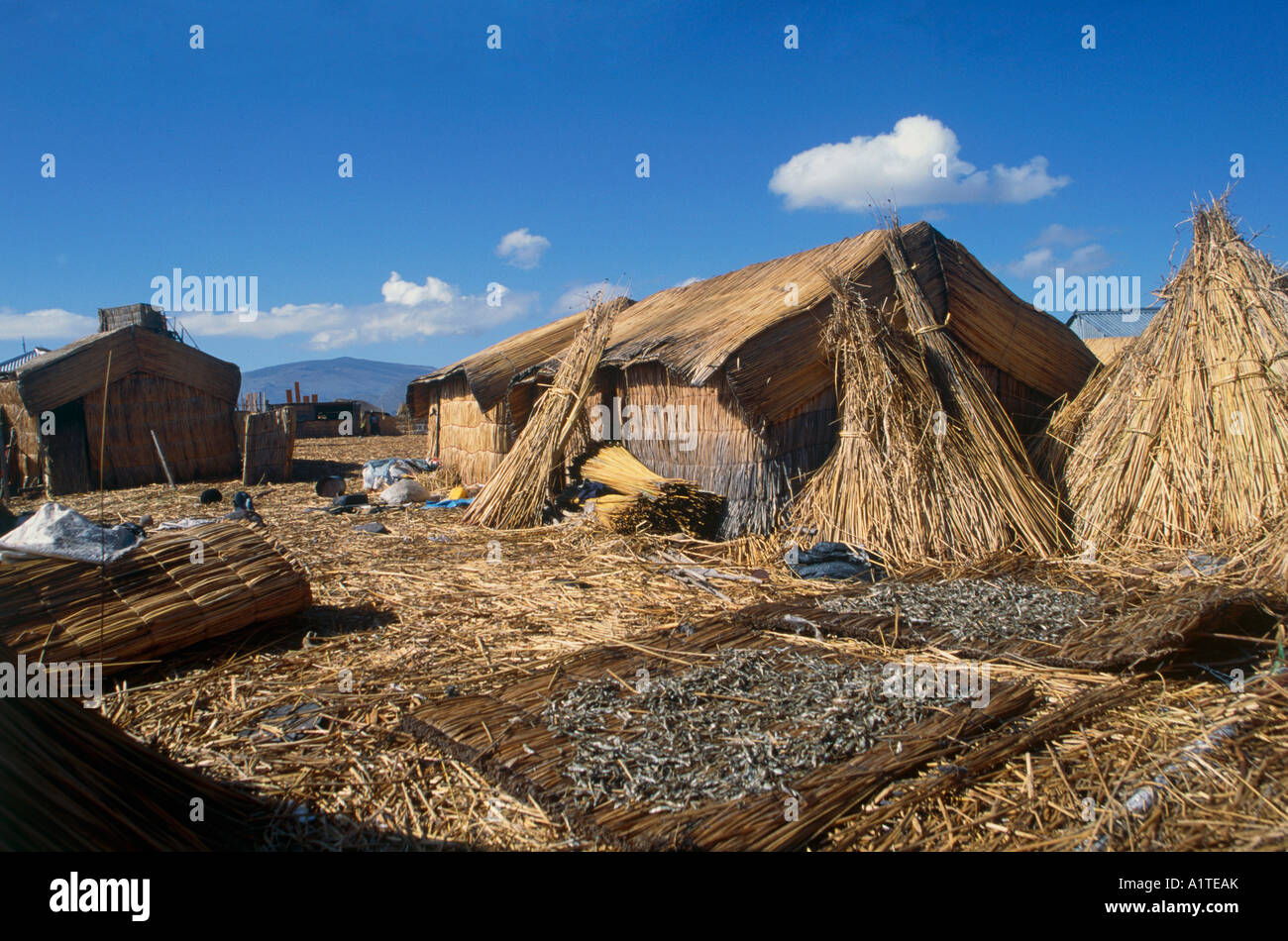 drying fishes floating island made by totora reed lake titicaca peru bolivia - Stock Image
