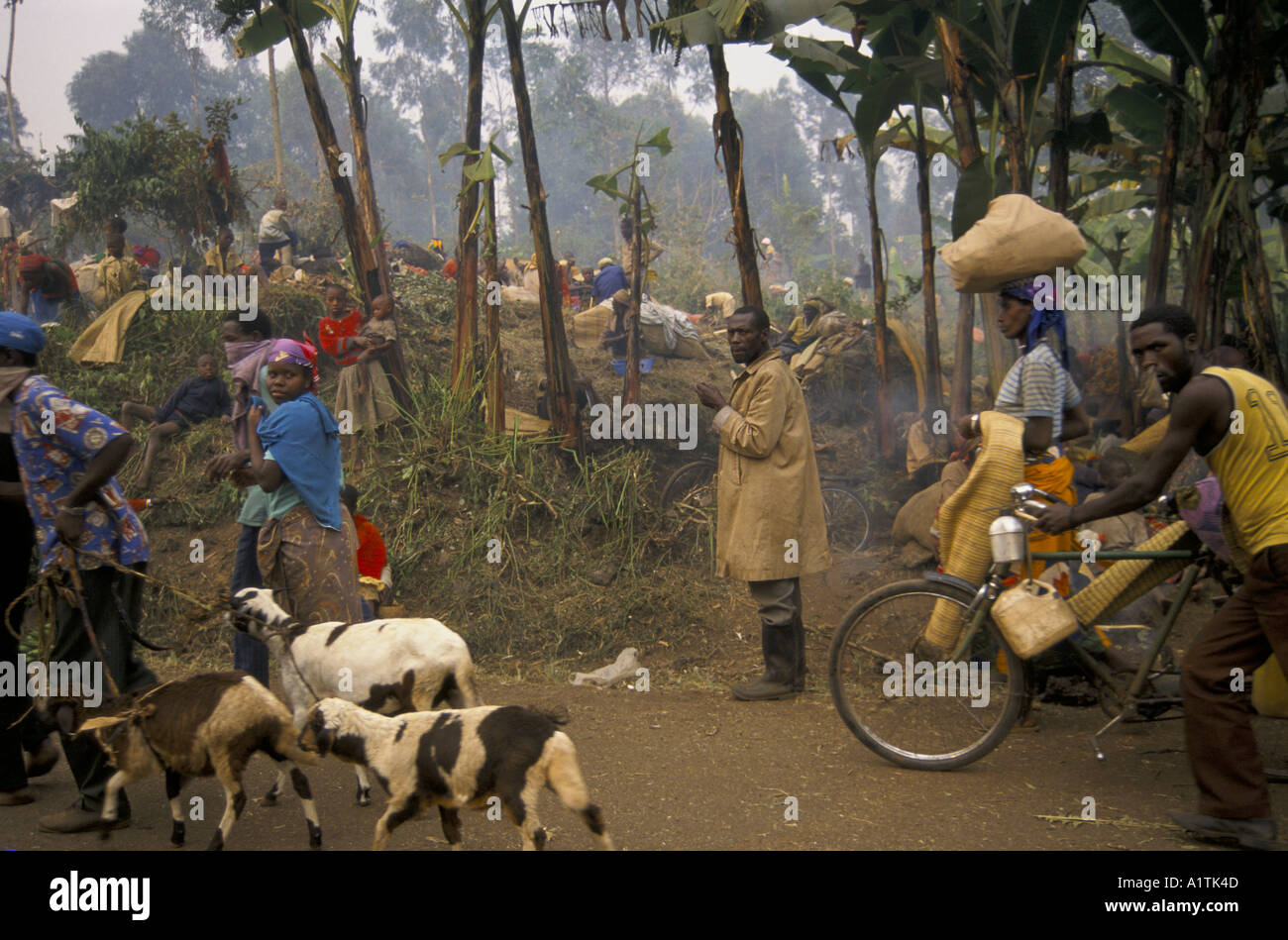 GOMA ZAIRE EXODUS FROM RWANDA CONTINUES ZAIRE RWANDA BORDER JULY 1994.People walk back to Rwanda with their animals - Stock Image