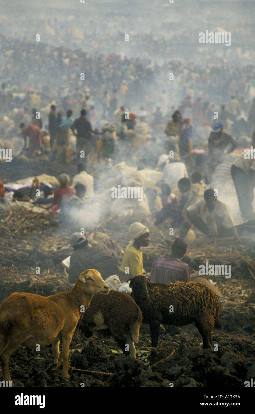 GOMA ZAIRE KIBUMBA REFUGEE CAMP JULY 1994 VIEW OF CAMP WITH SHEEP AND SMOKING FIRES - Stock Image