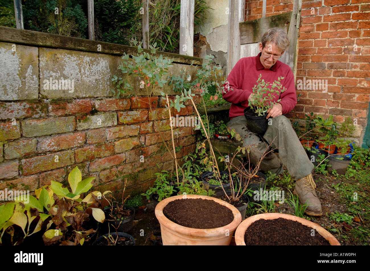 a gardener working in a walled garden in a country house - Stock Image