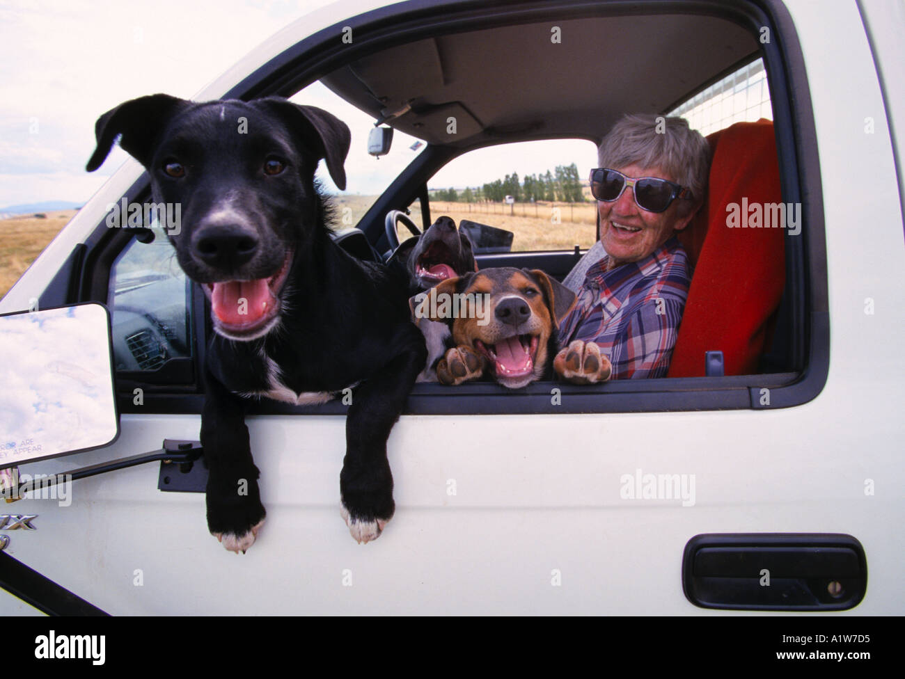 Border Collie Kelpie Cross High Resolution Stock Photography And Images Alamy