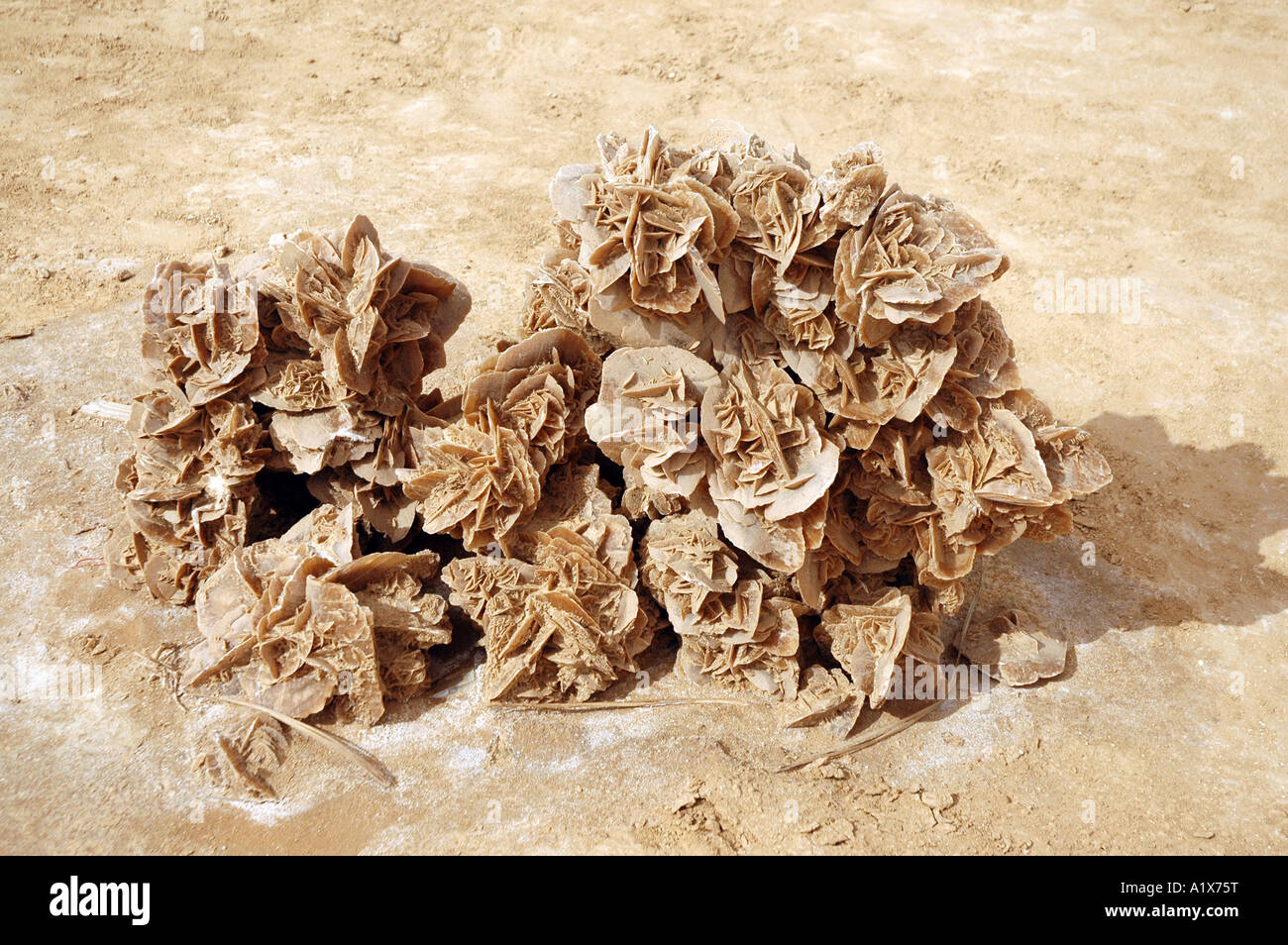 Souvenirs stall with desert roses on Sahara desert in Tunisia - Stock Image