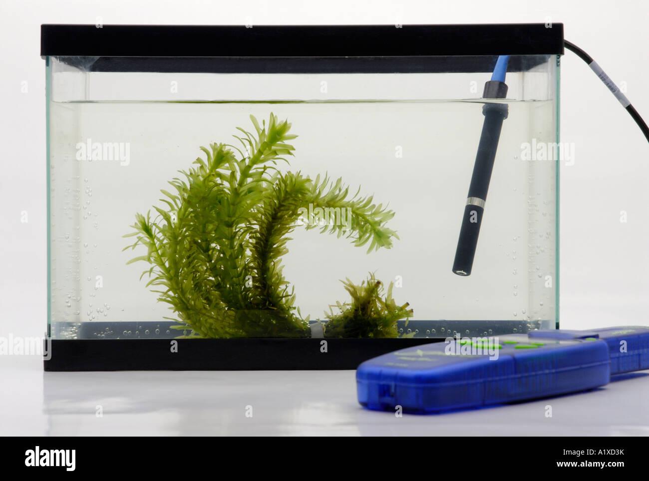 Dissolved oxygen sensor and aquatic plant - Stock Image