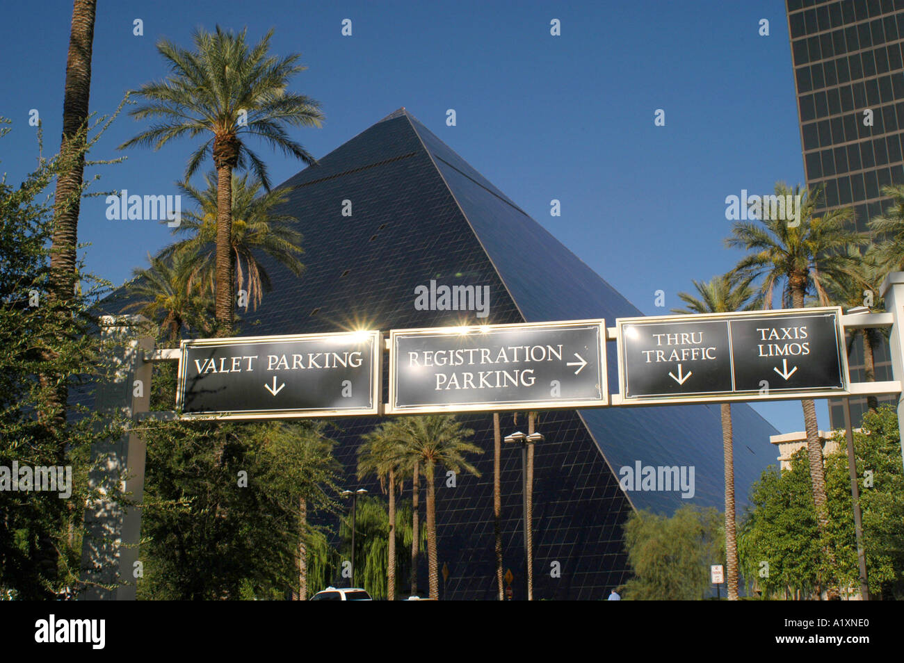 Palm trees and illuminated direction signs showing the way
