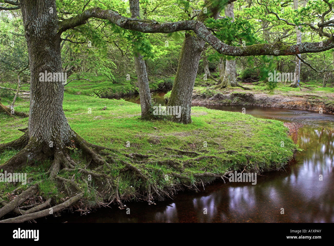 Ober Water in the New Forest National Park, Hampshire, England Stock Photo