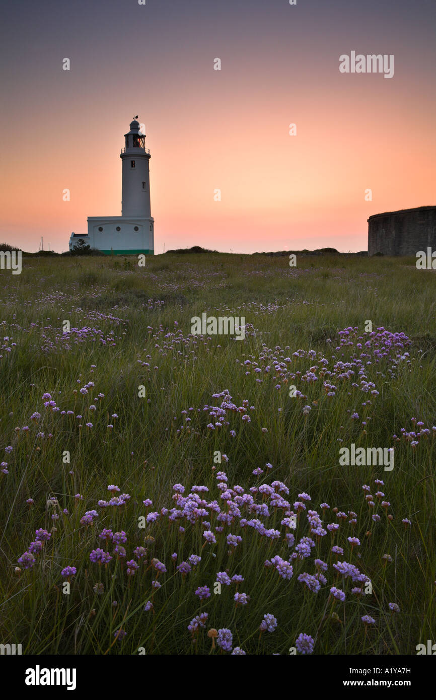 Thrift growing in a meadow besides the Hurst Spit lighthouse, Hampshire, England - Stock Image