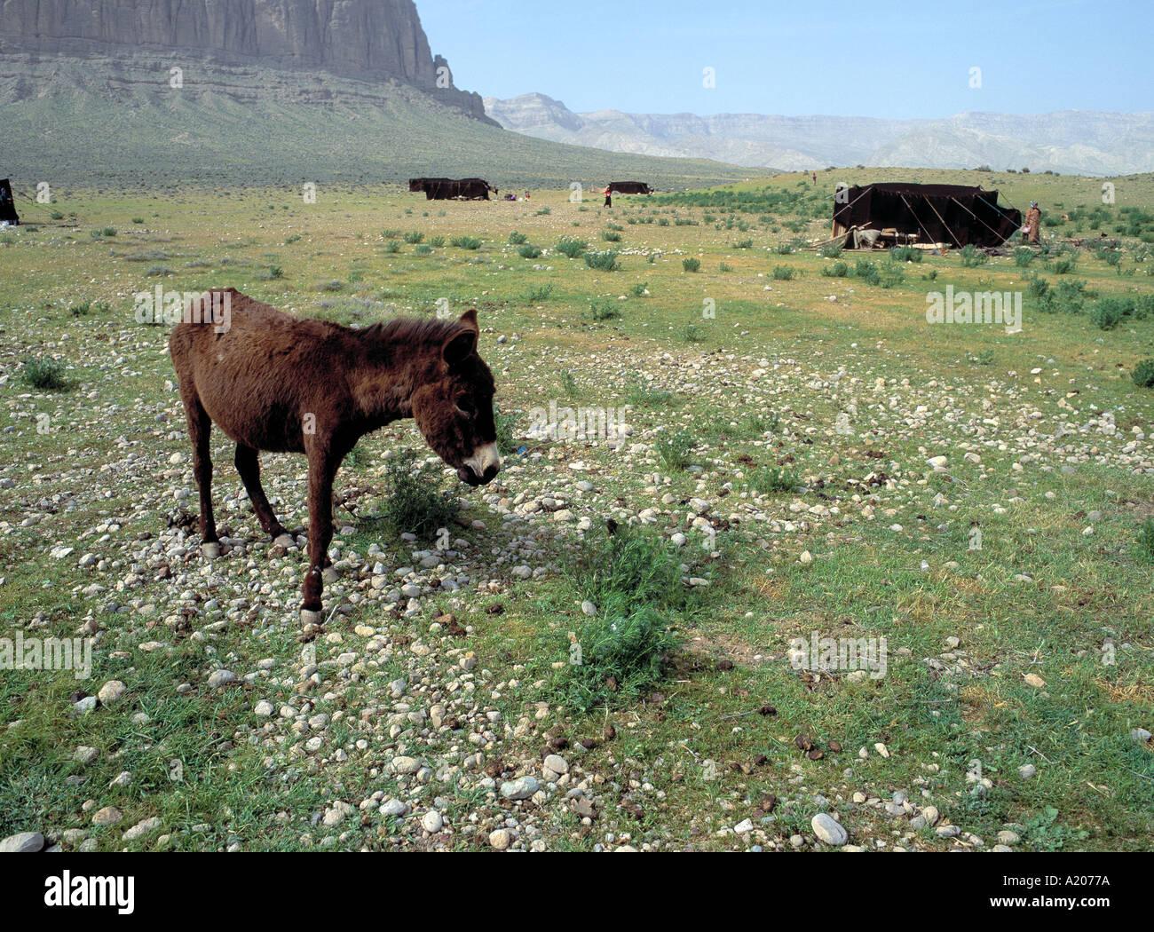 A Bedhouin encampment Shiraz - Stock Image