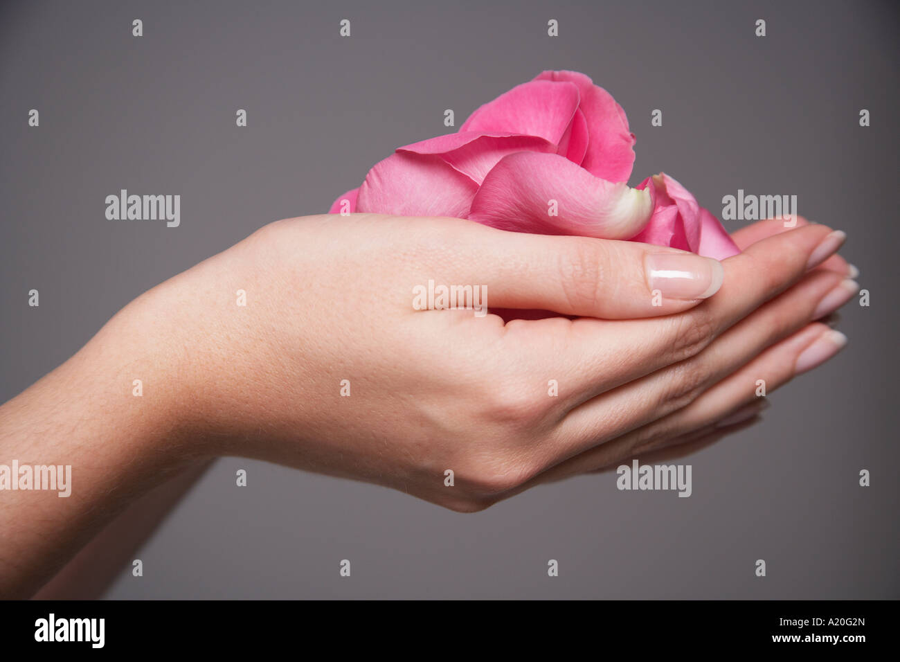 Woman cupping hands full of pink rose petals, close-up on hands Stock Photo