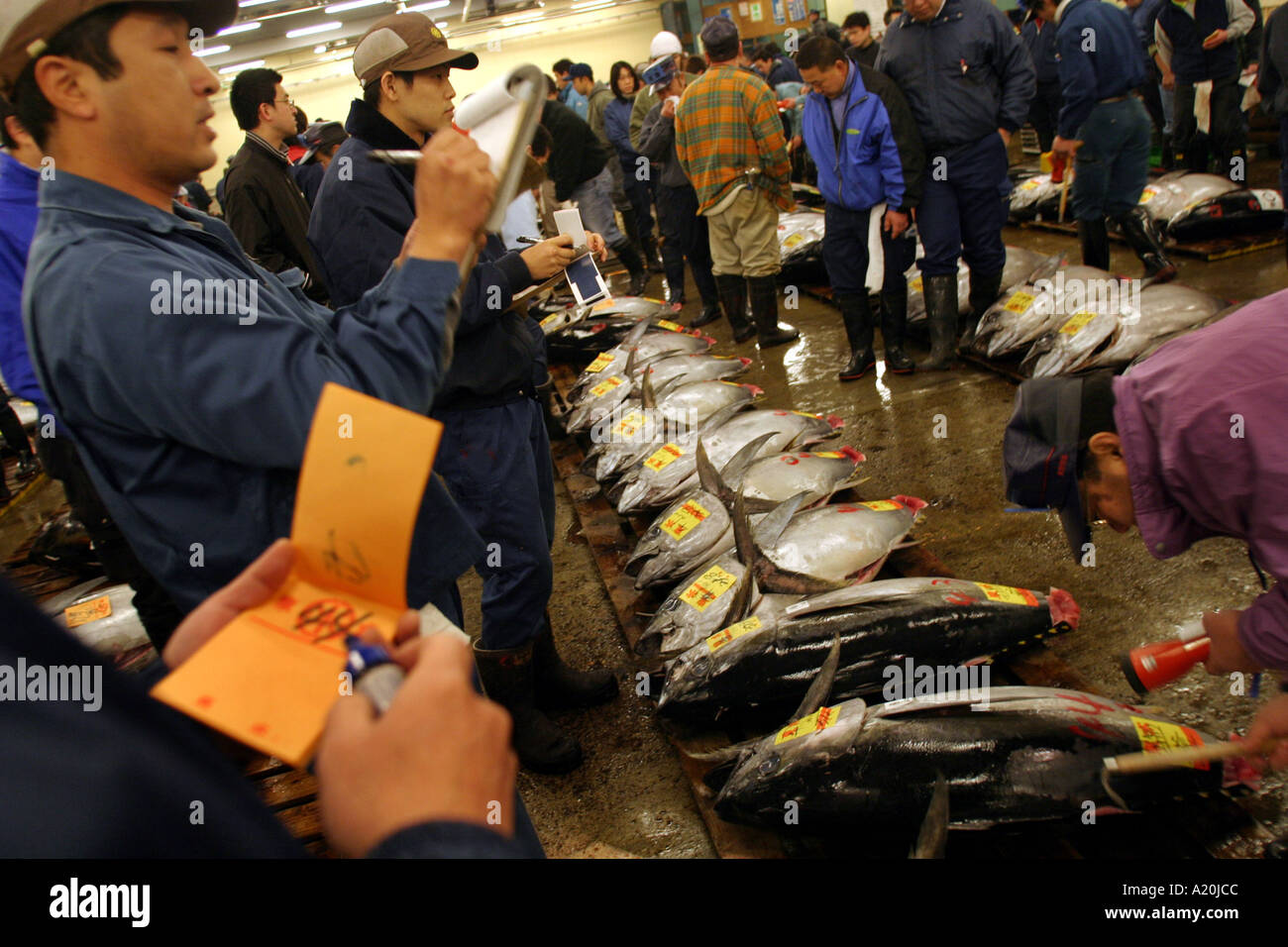 Fresh tuna lies awaiting inspection and auction at Tsukiji fish market the worlds largest daily fish market, Tokyo, - Stock Image