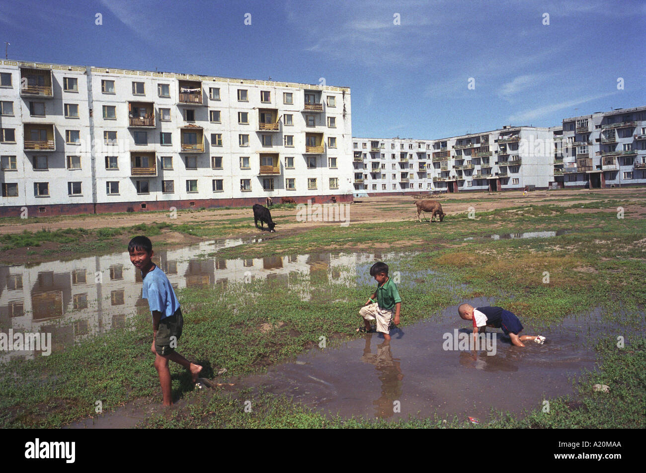 Children play in puddles of water with cows grazing nearby, Darkhan, Mongolia. Stock Photo