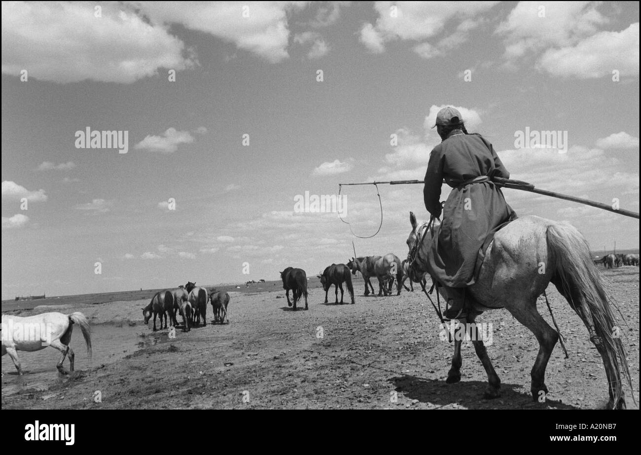 A nomadic girl on the steppes with her horses, Mongolia - Stock Image