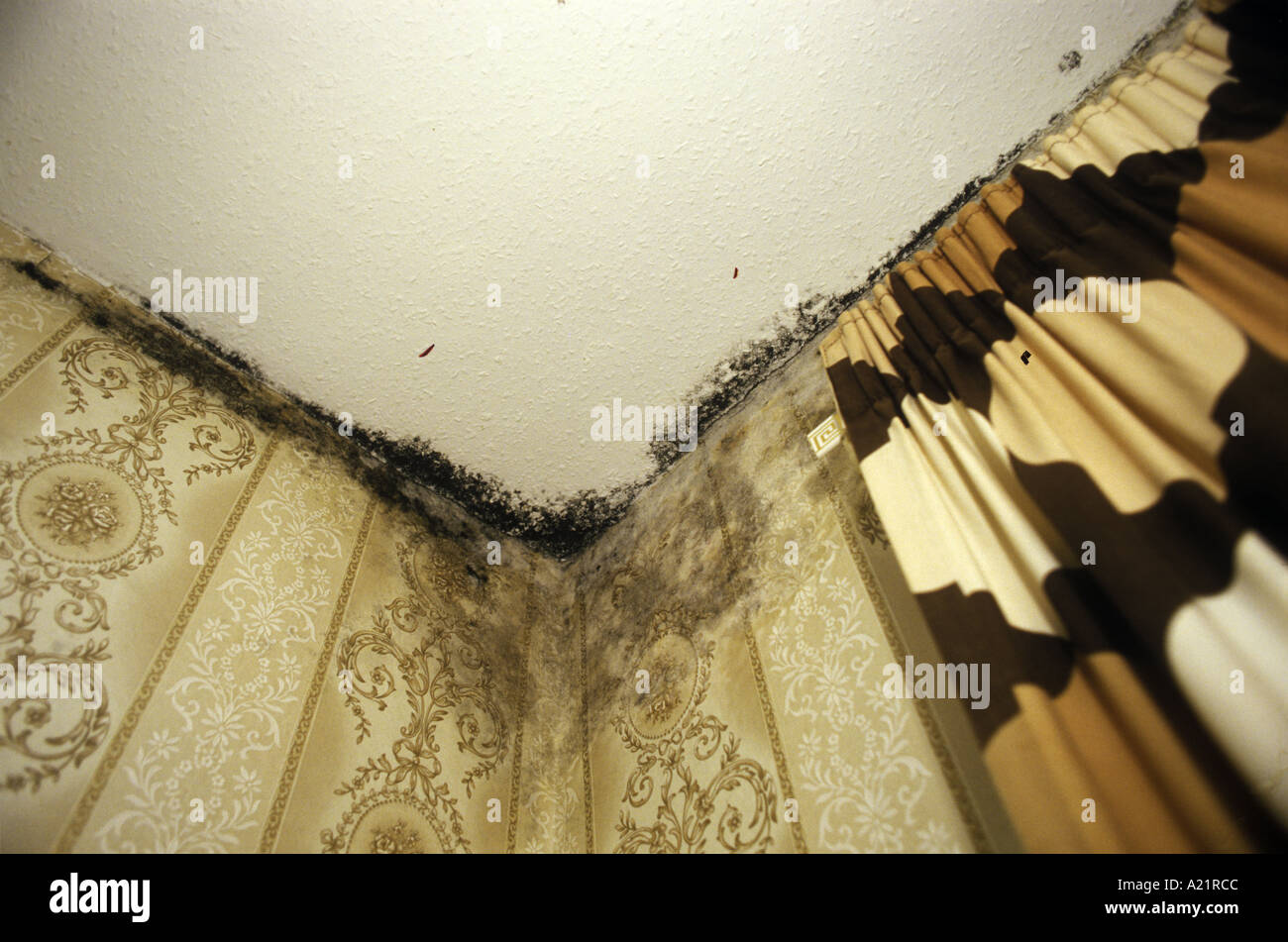 Mould and damp. Poor housing conditions. - Stock Image