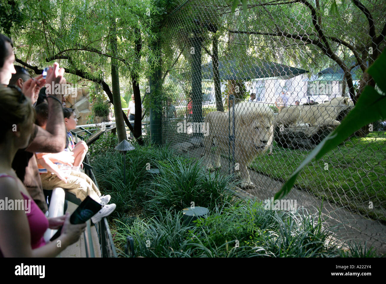 lion siegfried roy s secret garden dolphin habitat las vegas nevada stock image - Siegfried And Roy Secret Garden