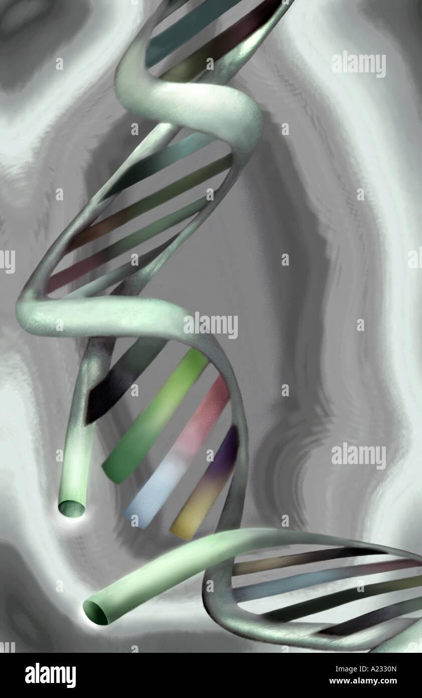 Double Helix DNA - Stock Image