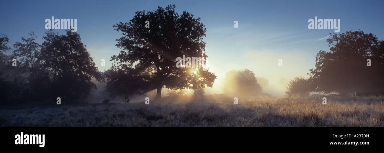 Sunrise and mist early in the morning at Shepherd Meadows, Sandhurst, Berkshire England UK - Stock Image