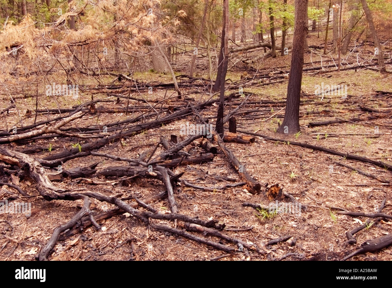 save forest stock photos save forest stock images alamy