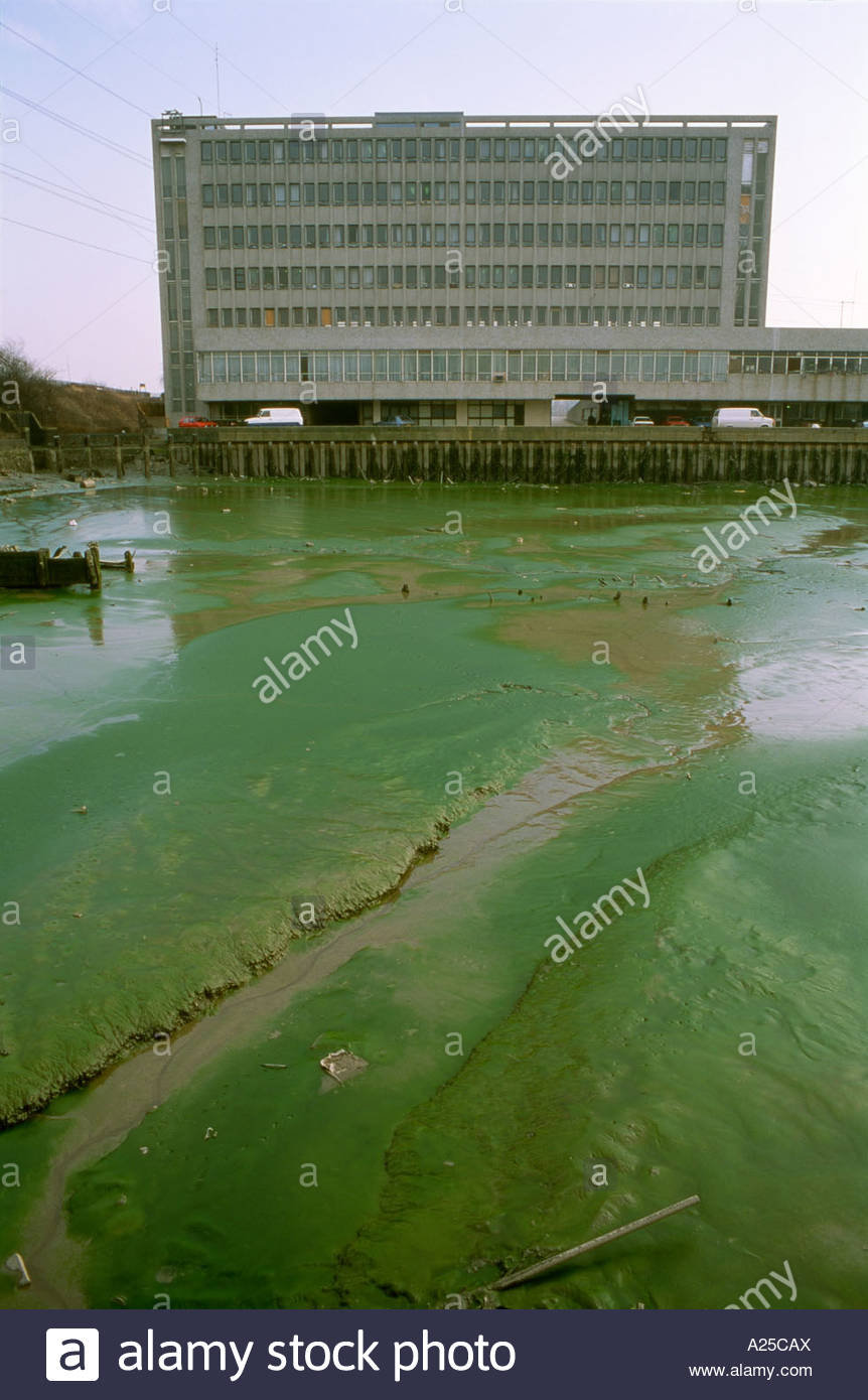 Eutrophication of waterway near to sewage and stormwater discharges River Lee East London - Stock Image