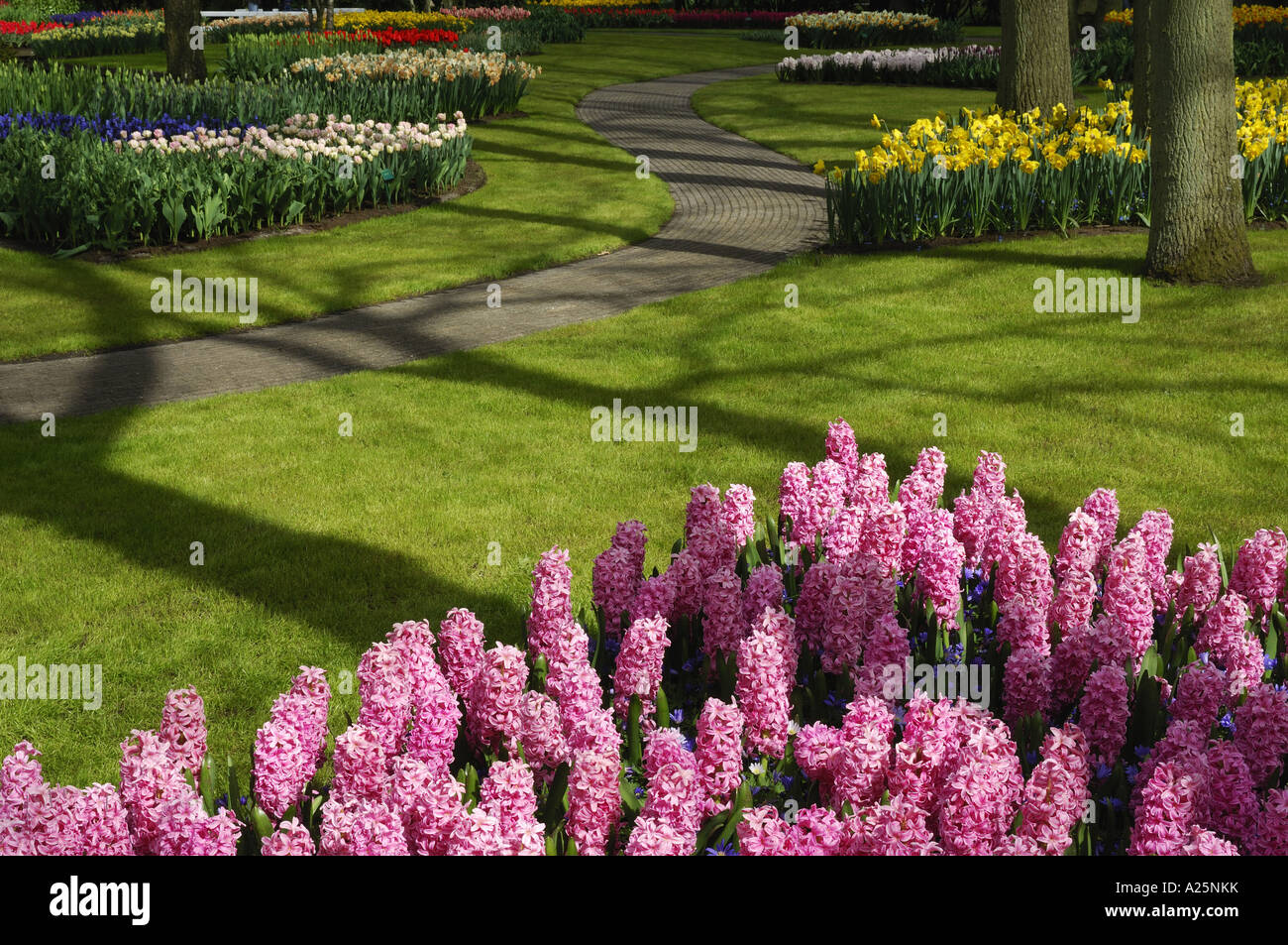 Jacinthe (Hyacinthus orientalis), park with flowerbeds and lawns, Netherlands, Keukenhof Stock Photo