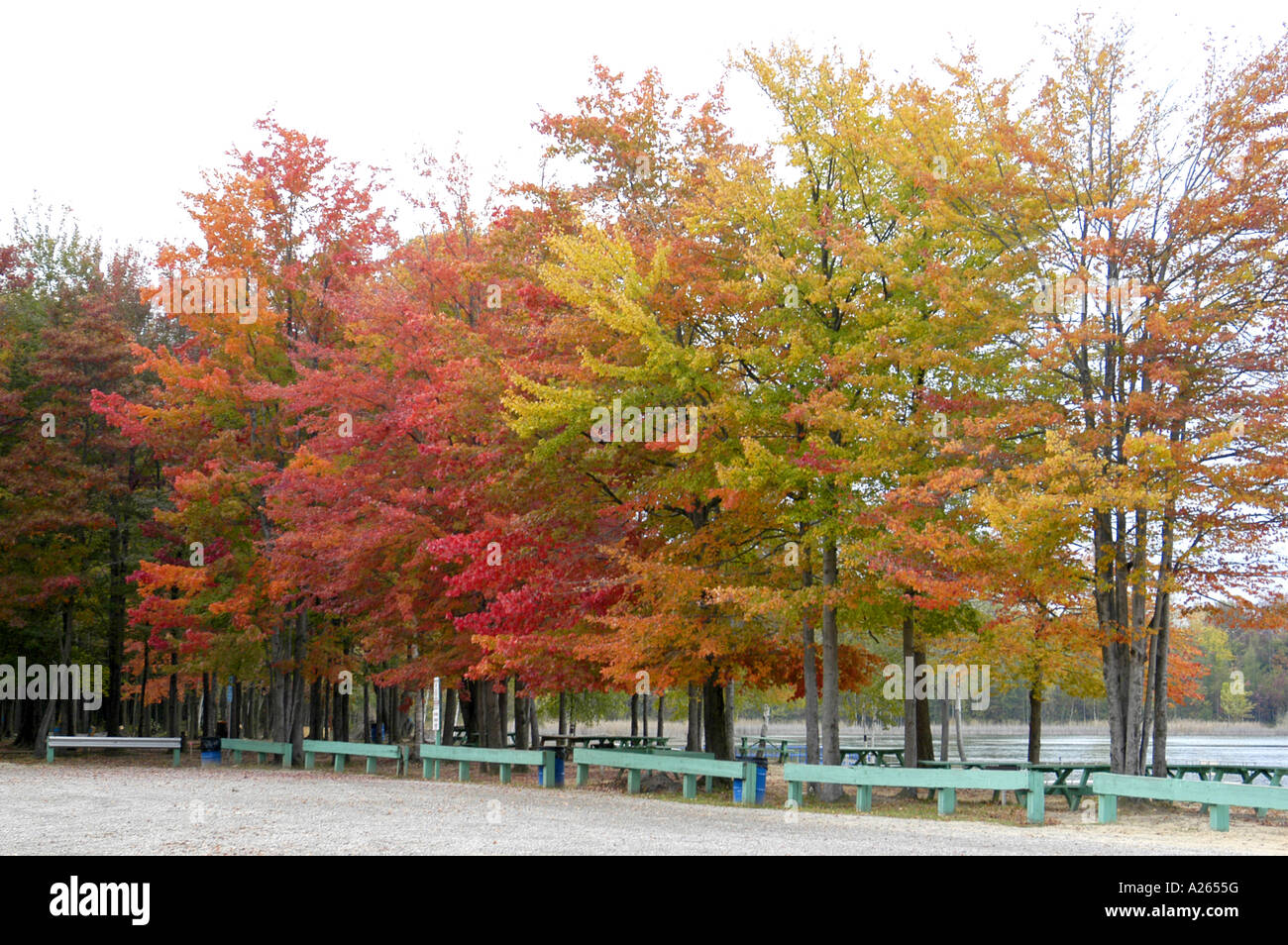 Fall colors in Southeast Michigan MI near Detroit - Stock Image