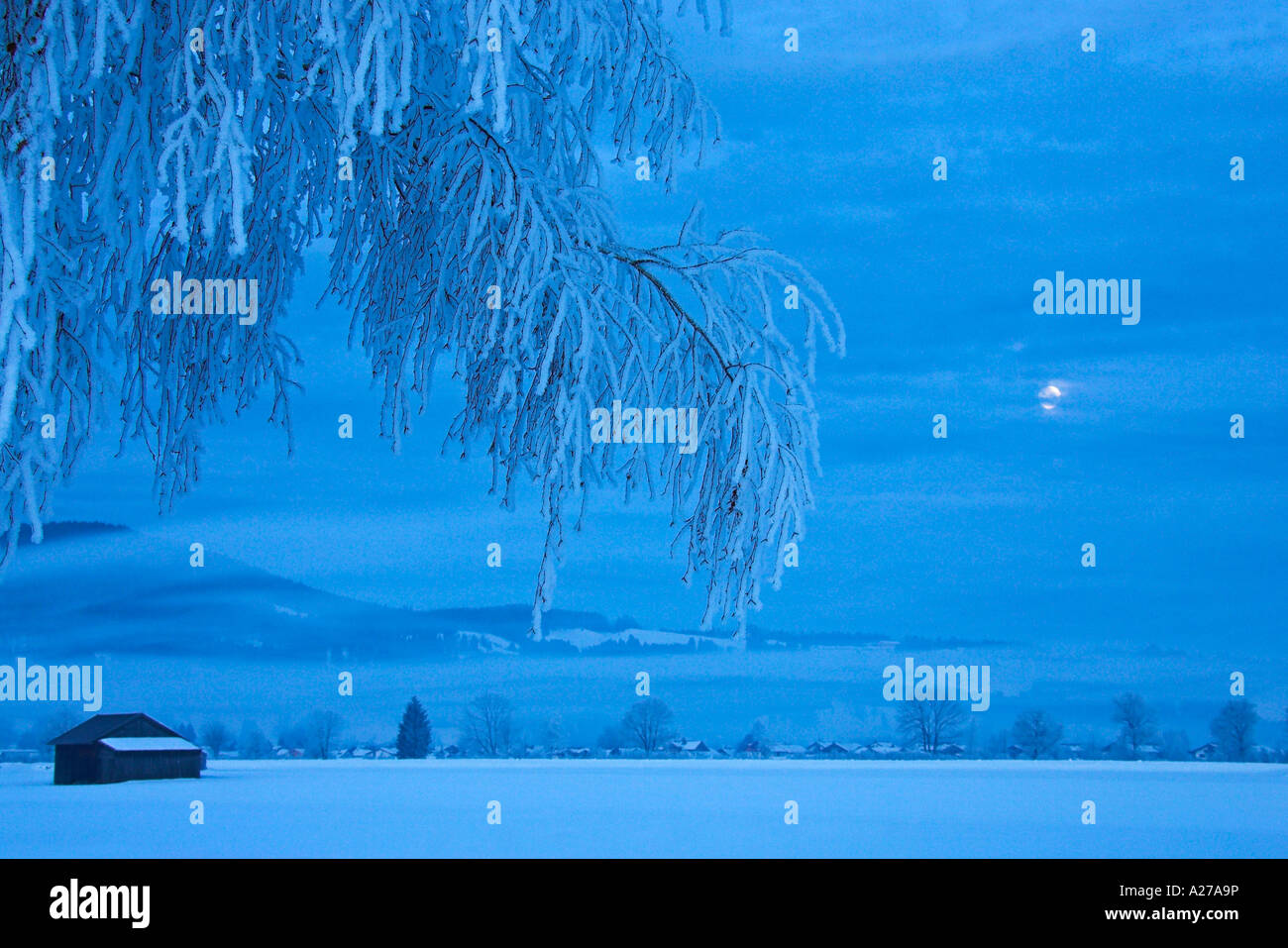 Frosty and foggy at moonshine in the bavarian mountains (alps). Hoarfrost in the trees. Kochelsee Upper Bavaria - Stock Image