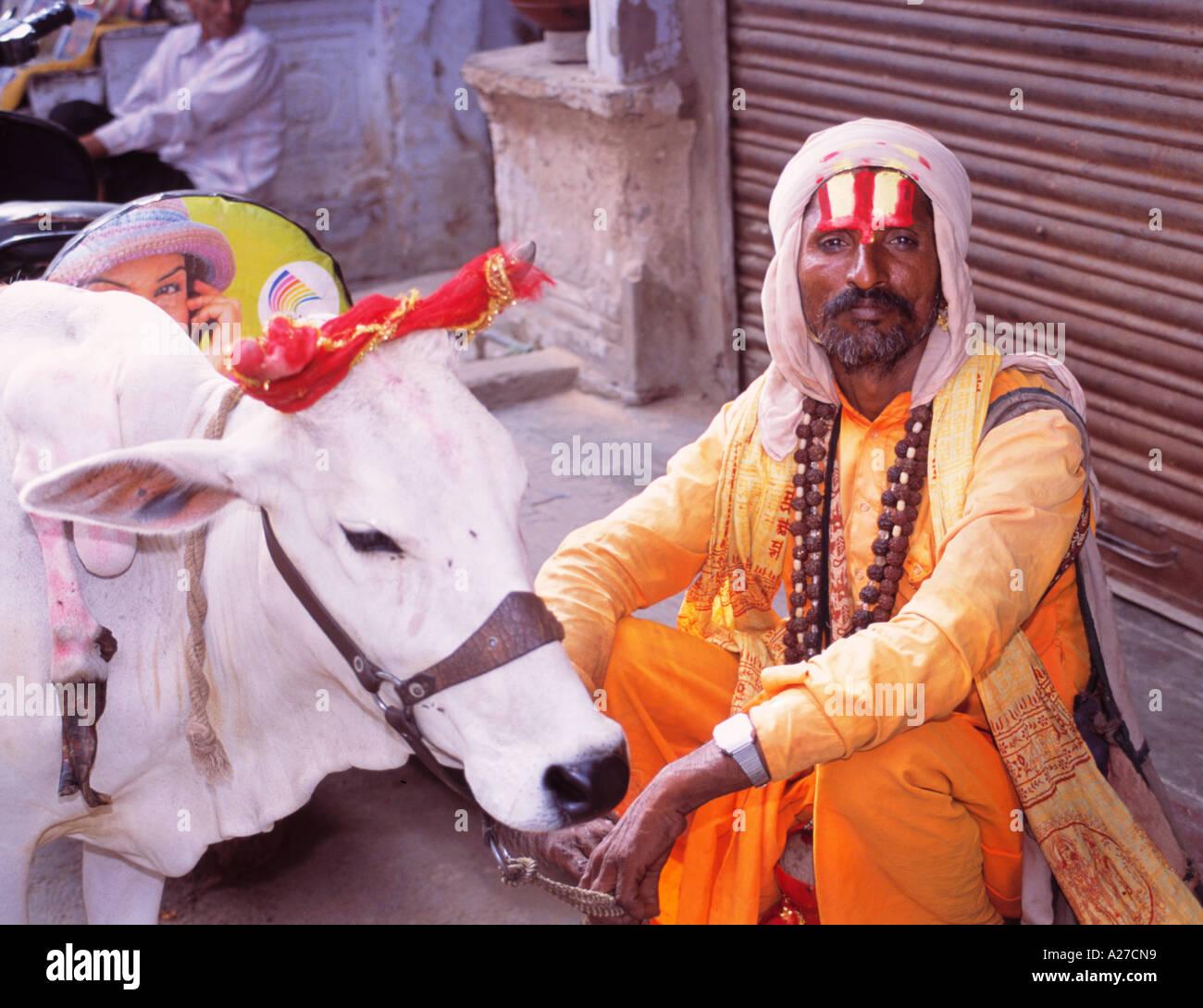 INDIA RAJASTHAN PUSHKAR BEGGAR WITH COW - Stock Image