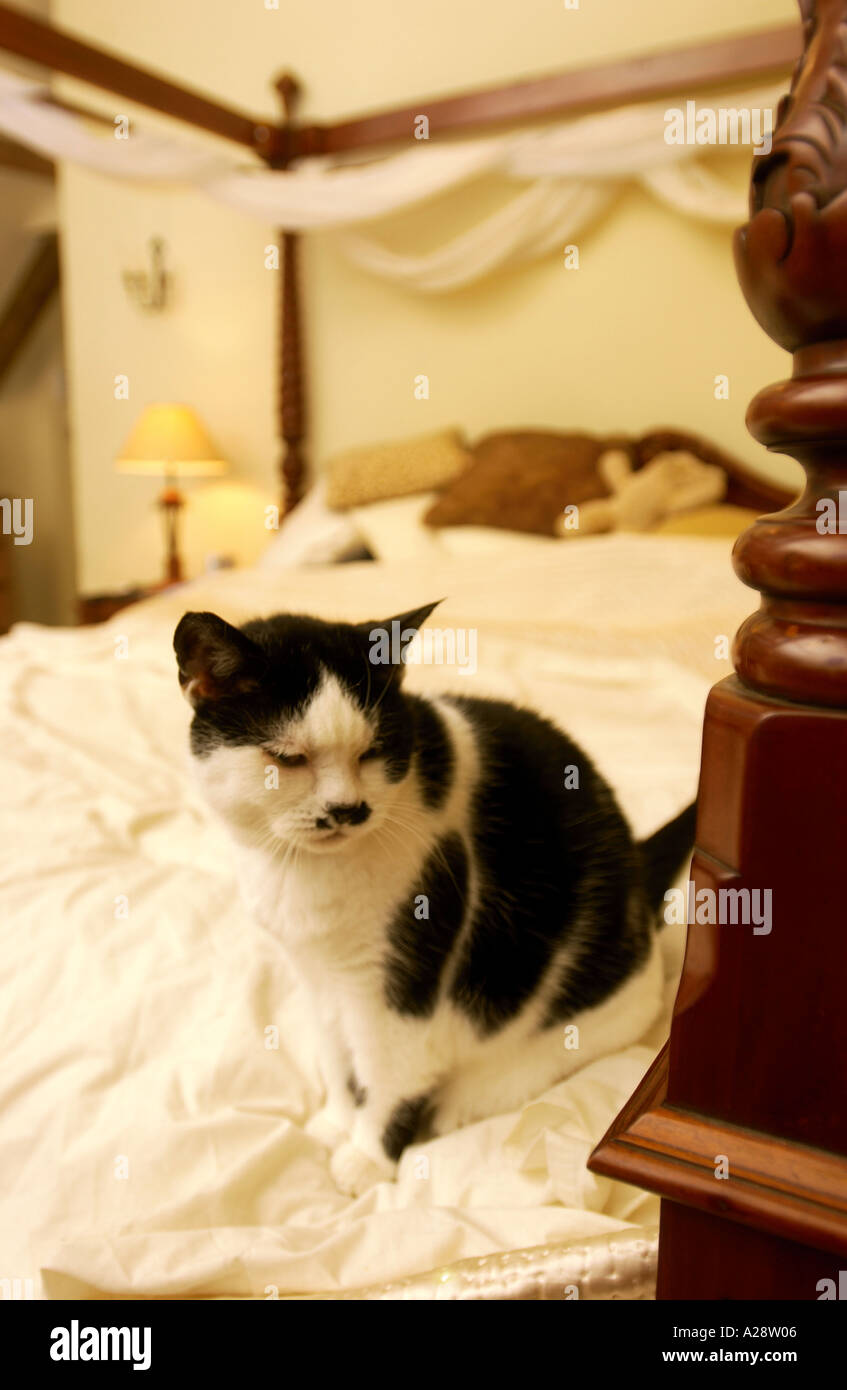 A CAT ON A FOUR POSTER BED - Stock Image