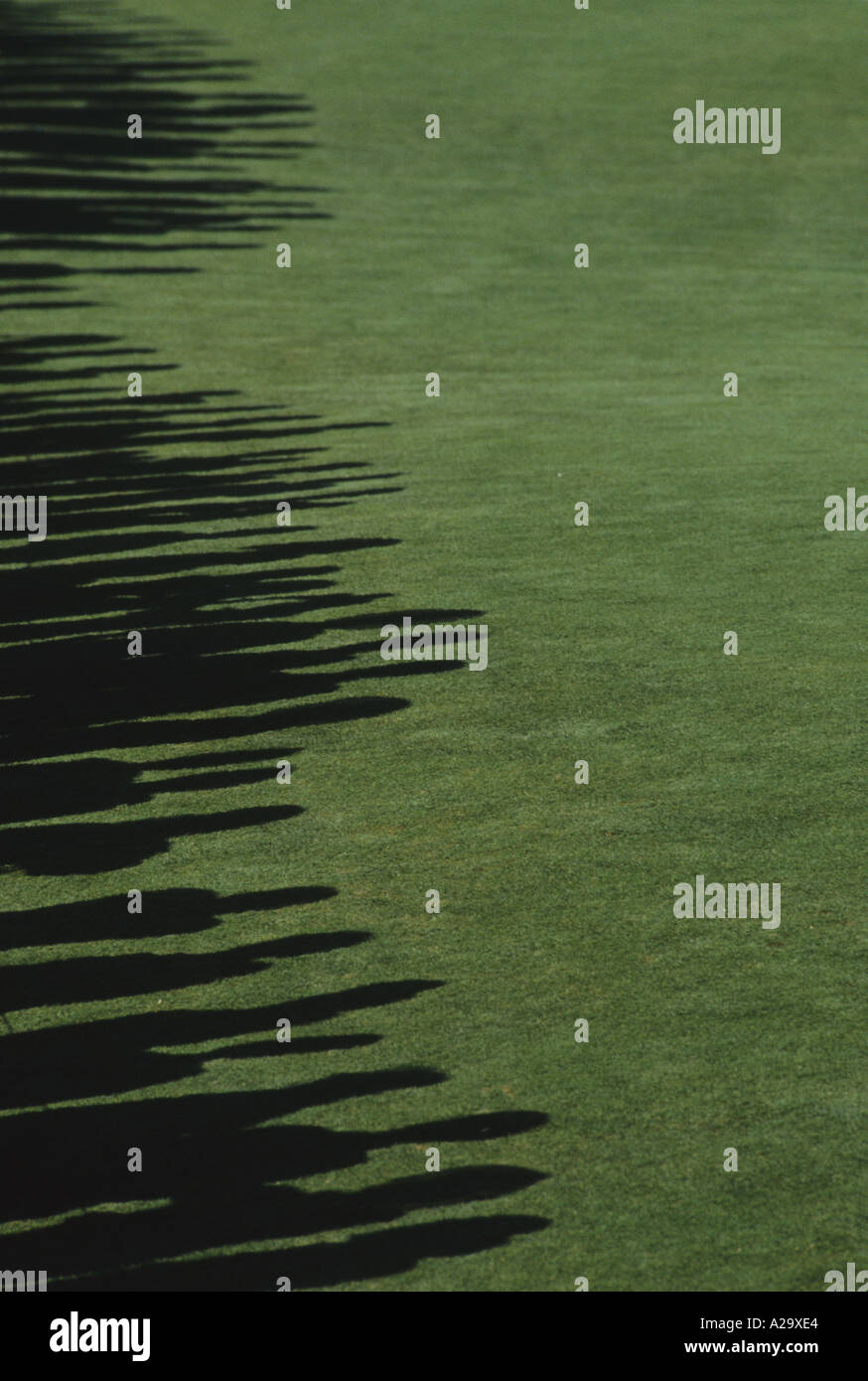 A line of shadows on the grass cast by spectators during a golf tournament - Stock Image