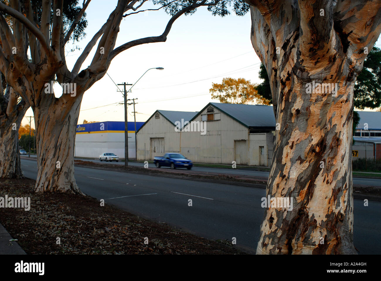 Old factory and warehouse, since demolished, viewed through old sugar-gums. - Stock Image