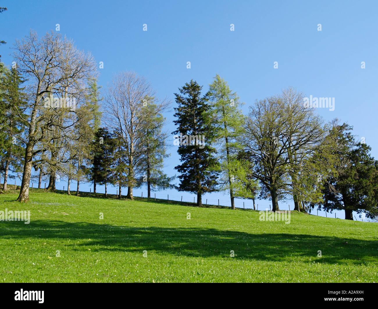 Tree Row Deciduous Trees An Conifers Stock Photos & Tree Row ...