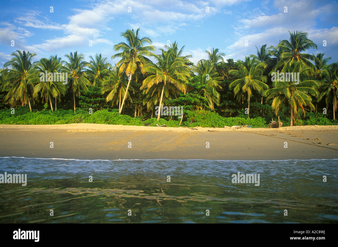 coco palms at a beach on the island Ko Lanta in Thailand - Stock Image