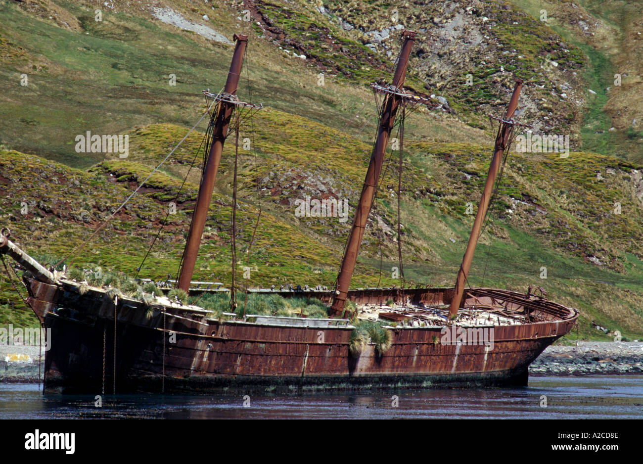 Abandoned whaling ship South Georgia - Stock Image