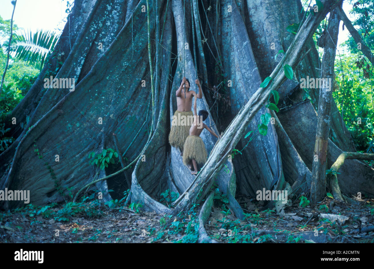 boys from a Yagua Tribe living near Iquitos using the lianas of a giant tree as swings - Stock Image