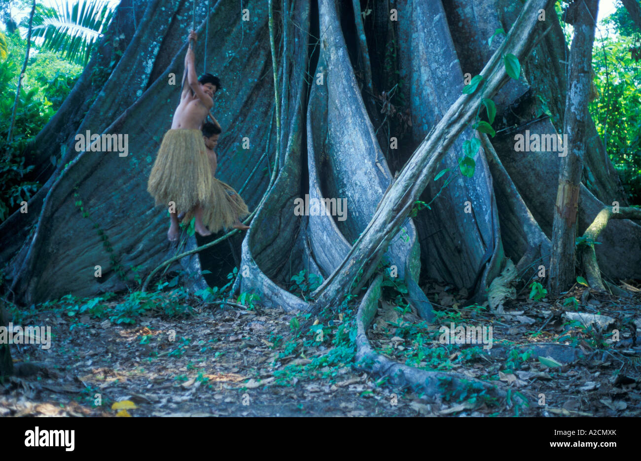 boys from a Yagua Tribe living near Iquitos using the lianas of a giant tribe as swings - Stock Image
