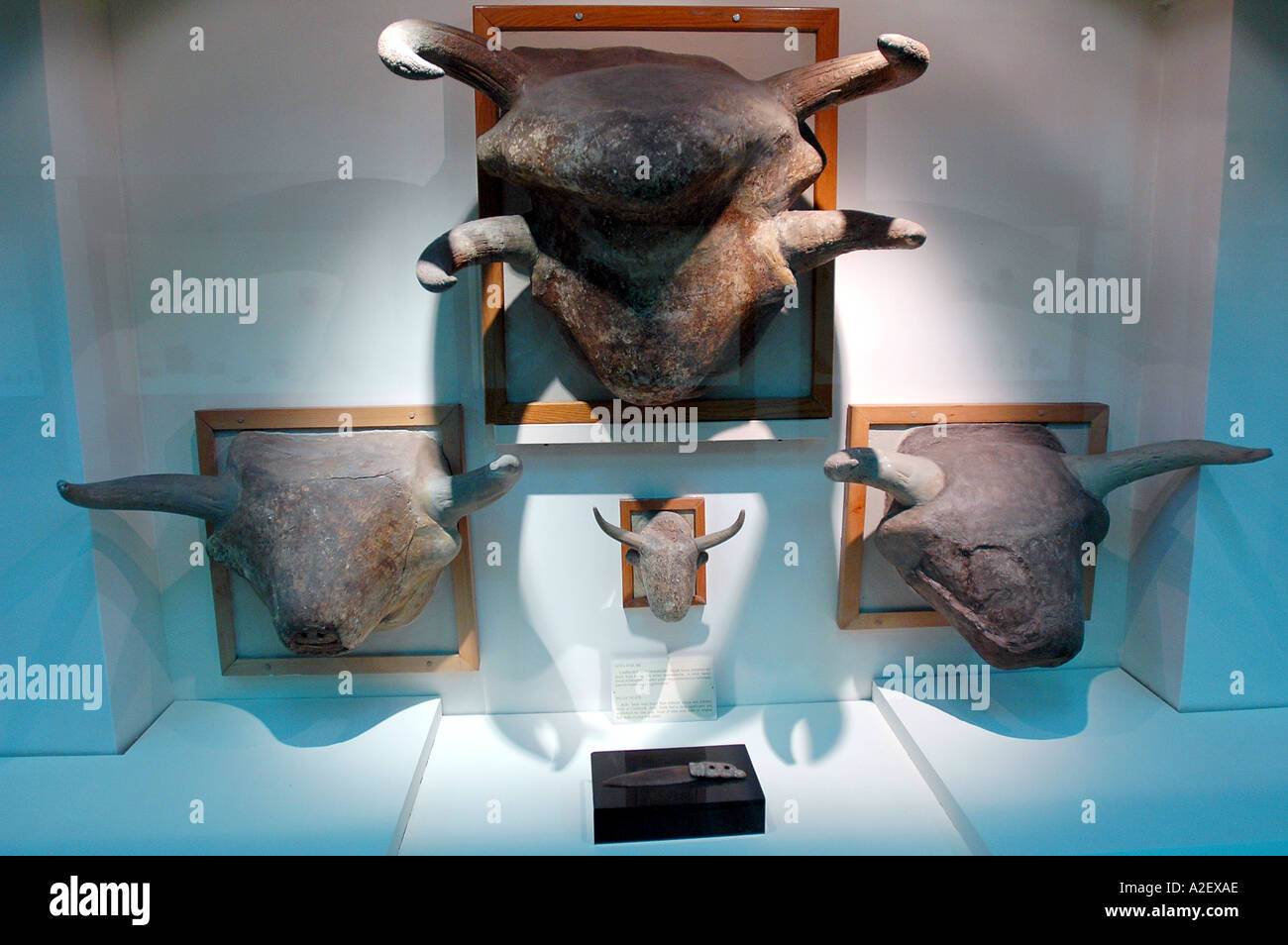 Bull heads on the walls of Catal Huyuk houses artefact Anatolian Civilization Museum Ankara Turkey - Stock Image