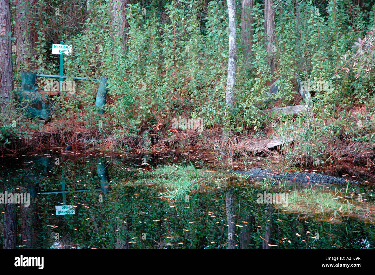 P32 027 Okefenokee - Moonshine Still With Gator - Georgia - Stock Image