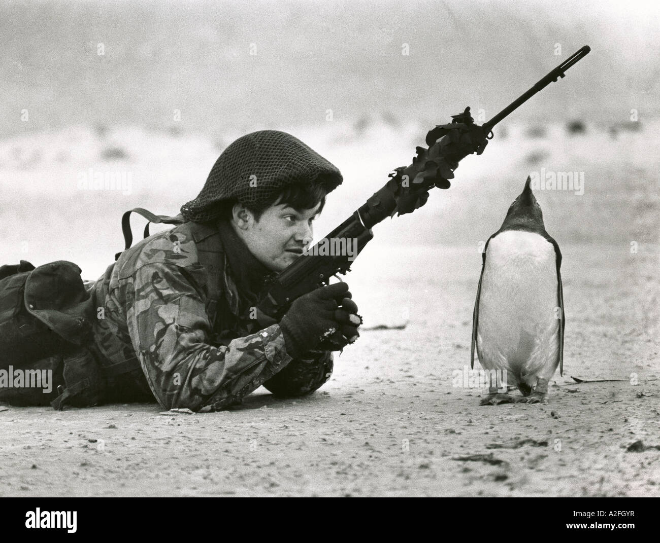 A British soldier and penguin on a beach in the Falkland Islands during a patrol in 1983 after the Falklands conflict - Stock Image